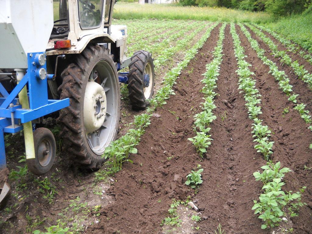 azienda_agricola_toldo_le_masiere_7