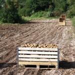 azienda_agricola_toldo_le_masiere_13