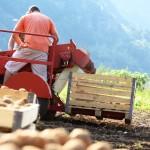 azienda_agricola_toldo_le_masiere_15