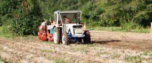 Al via la raccolta delle patate in Val d'Astico