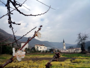 Nasce una fattoria sociale a Calvene