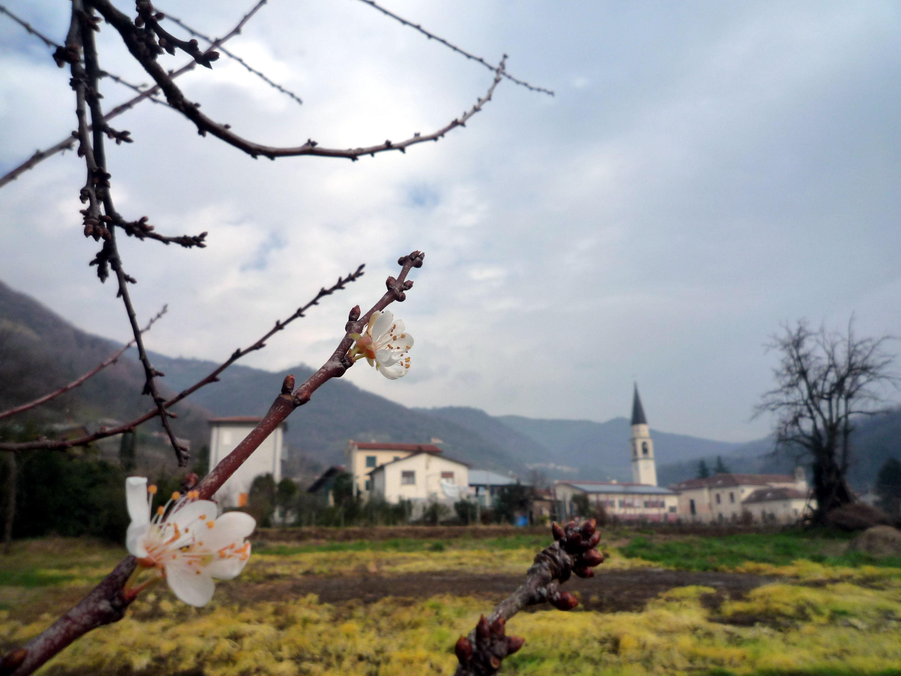 fattoria_sociale_calvene_1