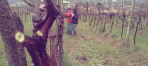 Al via i lavori di potatura a Calvene