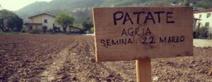 La semina delle patate in fattoria, chiamiamole per nome, Agria e Primura!