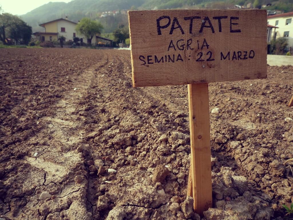 semina_patate_calvene
