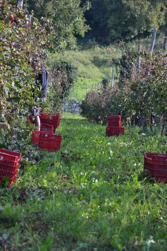 autunno fattoria sociale gianni canton