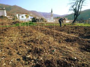 Piccoli frutti a Calvene