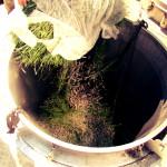 raccolta lavanda 4